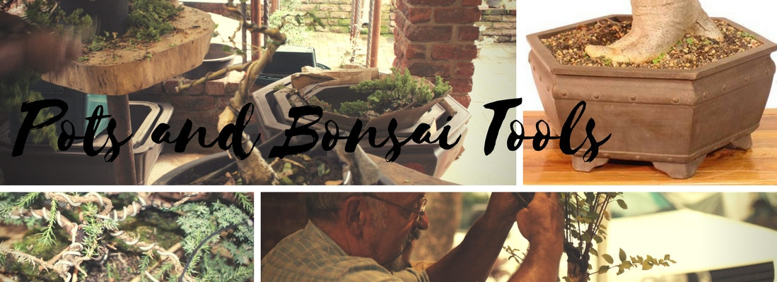 Quality Bonsai Trees For Sale In Tzaneen South Africa